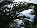椰子の木の下を進む
